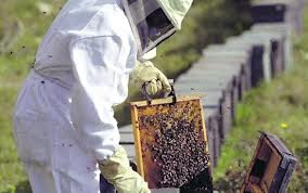 apicultura 01