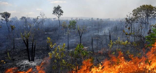 luta-contra-queimadas-florestais